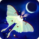 彩翼之星夜