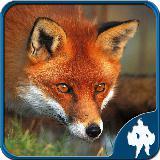 Fox Jigsaw Puzzles