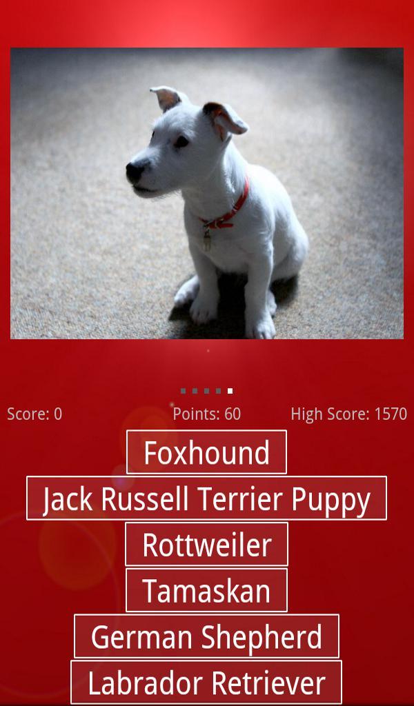Dog & Puppy Quiz 游戏截图4