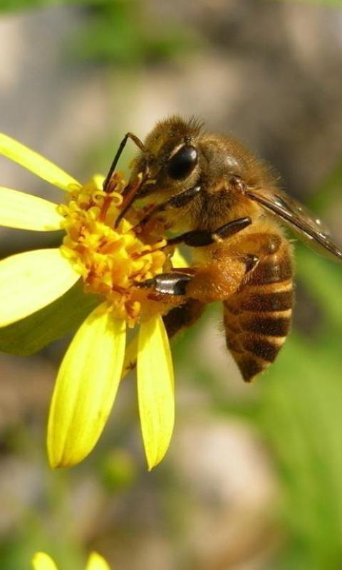 蜜蜂拼图 游戏截图3