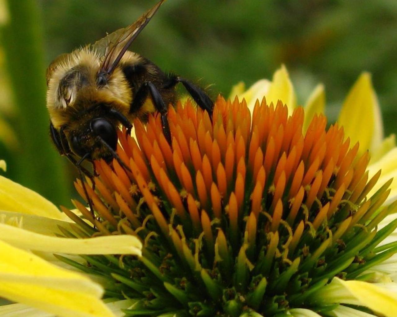 蜜蜂拼图 游戏截图5