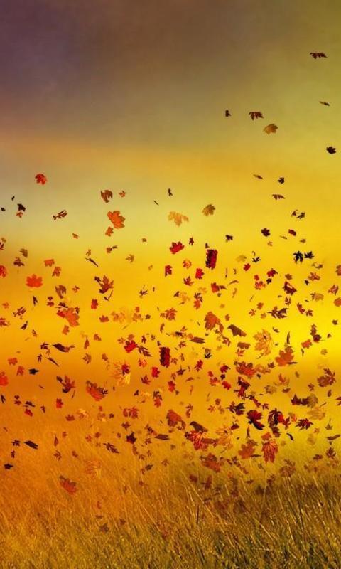 秋季拼图 游戏截图1