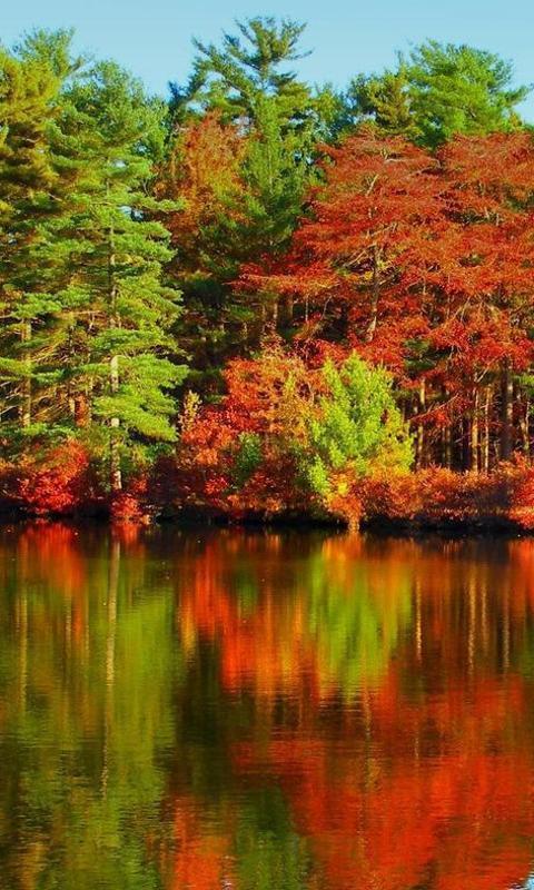 秋季拼图 游戏截图2