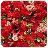 盛开的玫瑰花拼图