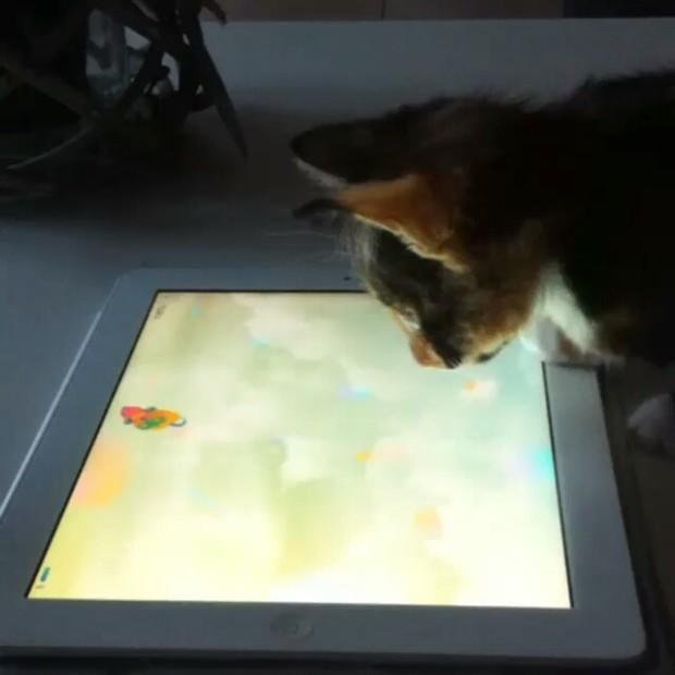 Full Game for Cats Paw Me. 游戏截图2