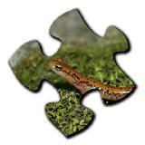Salamander Jigsaw Puzzles