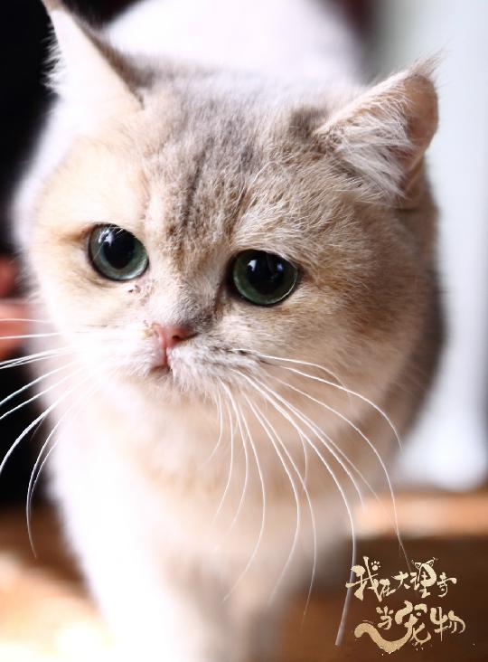 """看完《我在大理寺当宠物》好想养喵星人,""""云养猫""""你试过吗? 图片5"""