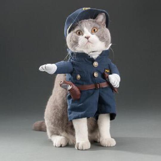 """看完《我在大理寺当宠物》好想养喵星人,""""云养猫""""你试过吗? 图片12"""