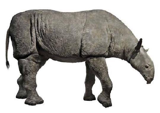 方舟生存进化巨犀 看起来像一个巨大的马和犀牛混合体
