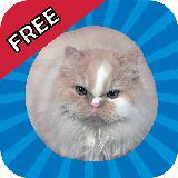 Jumping Cat (跳跳猫) FREE
