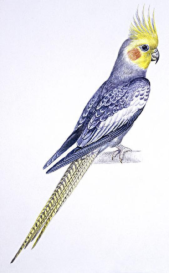创造与魔法鹦鸟饲料